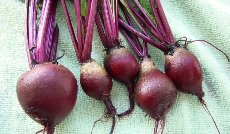 beet juice to boost iron