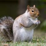 Get rid of squirrels