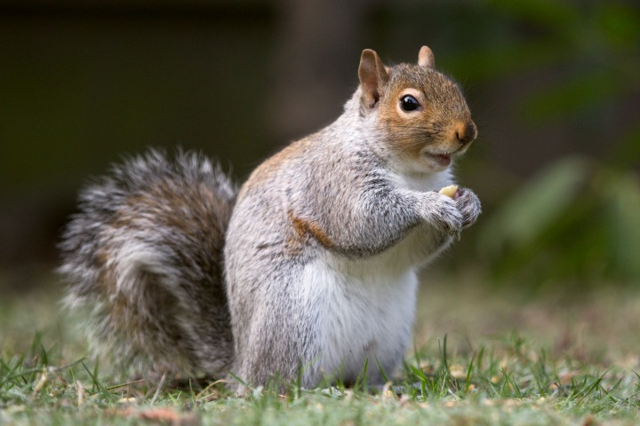 Get rid of squirrels | Build a squirrel proof cage
